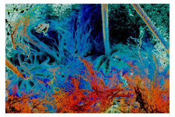 digital, art, sealife, colors, colorful, modern, abstract, contemporary